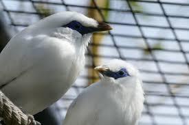 oiseaux chanteurs 1