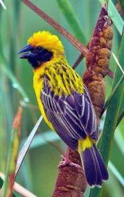 oiseaux chanteurs 2