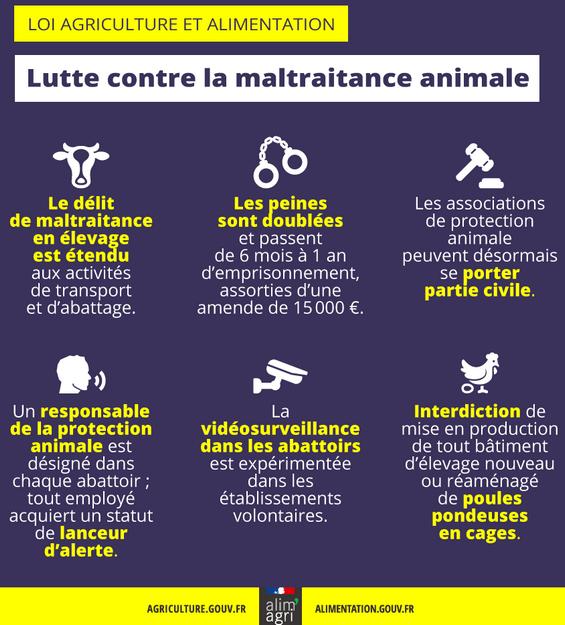 infographie-maltraitance-animale